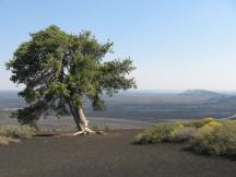 oben auf dem Inferno Cone, Craters of the Moon NM