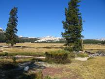 Tuolumne Meadows an der Tioga Road, Yosemite NP