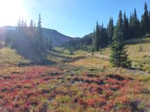 Wanderung in der Sunrise-Section des Mt Rainier NP